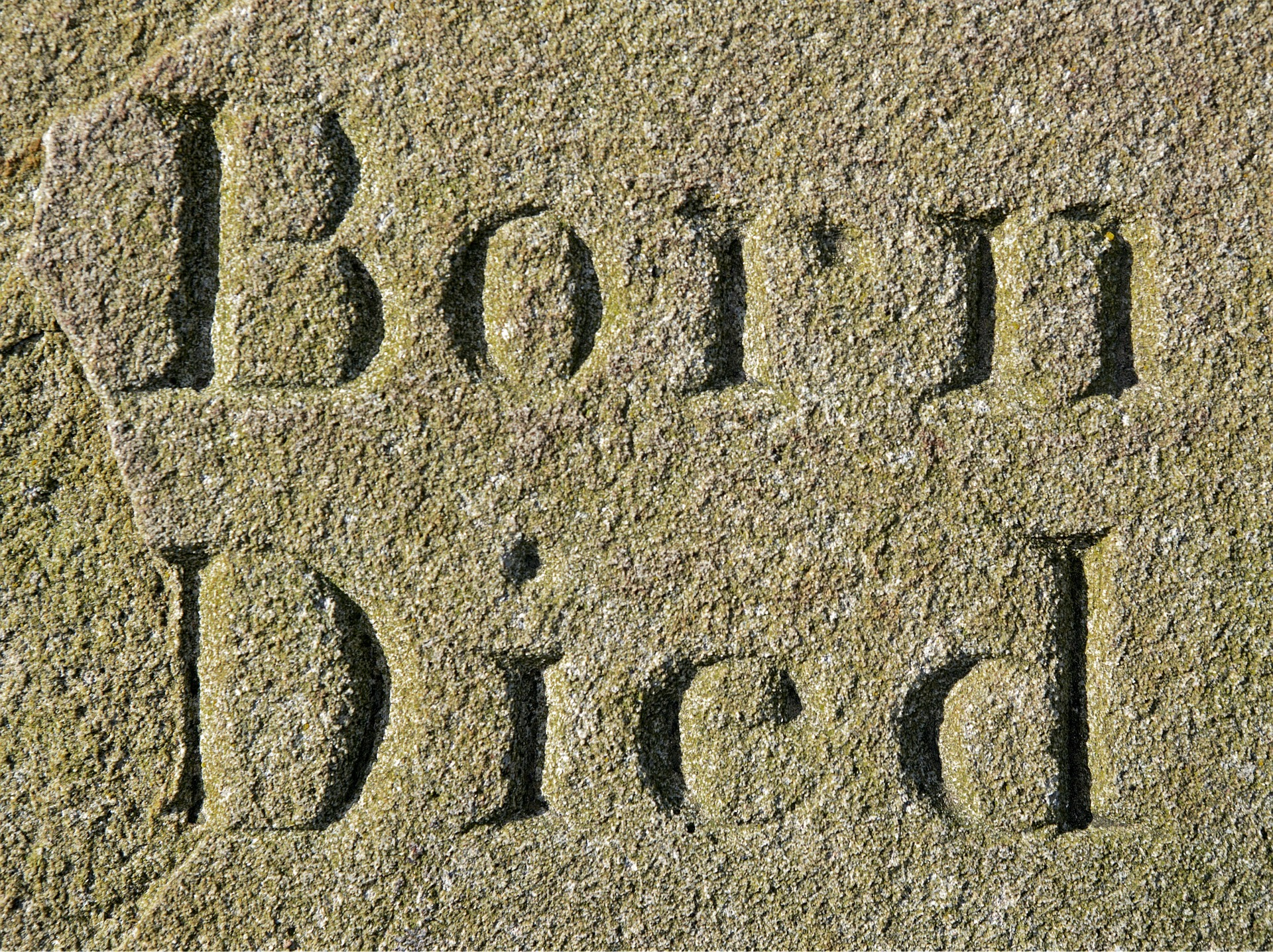 born-1264699_1920.jpg